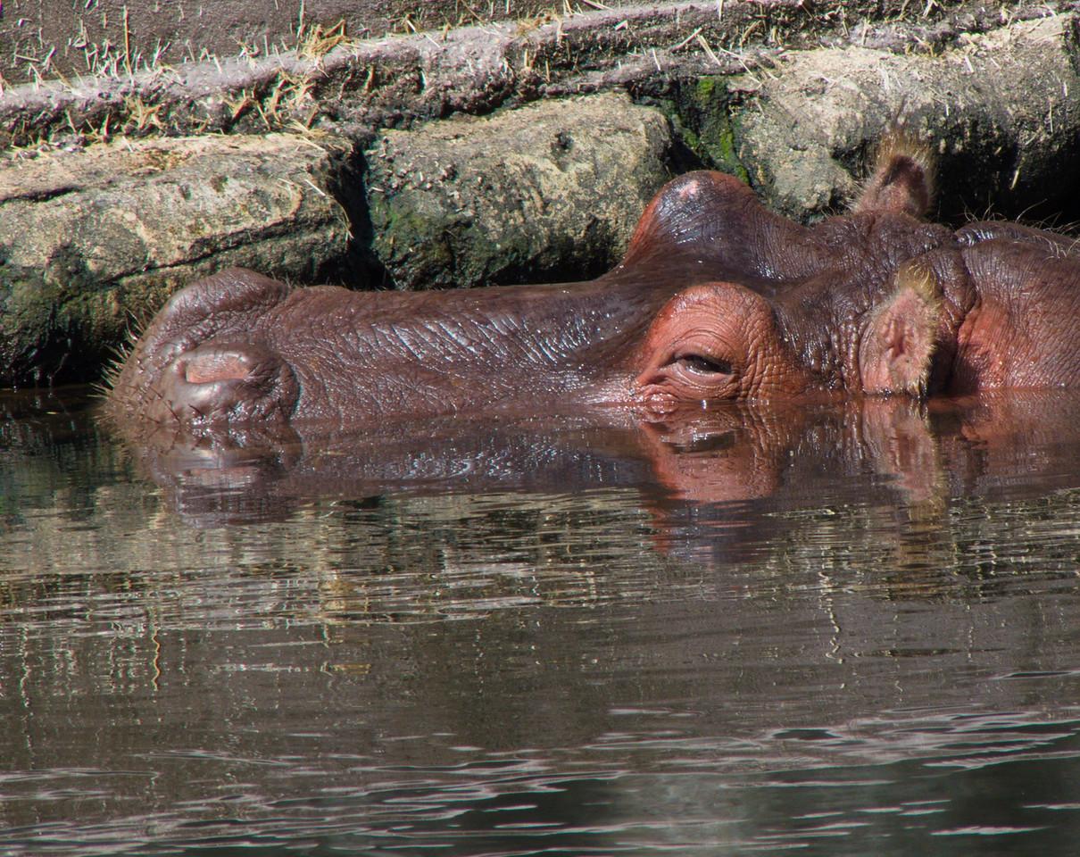Homosassa Springs Wildlife Park, FZ300