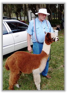 Alpaca at Funny Farm Alpacas, Lecanto, Florida