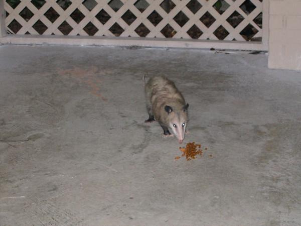 """<a href=""""http://xenogere.com/opossum-butt/"""" title=""""Opossum butt"""">Blog entry</a>"""