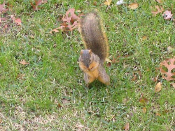 "<a href=""http://xenogere.com/nibble-nibble-pose/"" title=""nibble nibble pose"">Blog entry</a>"