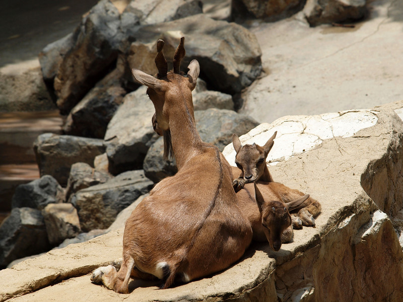 LA Zoo - 5 July 2010