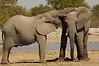 Elephant Pals, Etosha National Park, Namibia