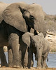 Elephant Cow and Calf, Etosha National Park,  Namibia