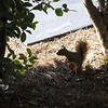 "<a href=""http://xenogere.com/the-squirrel-and-me/"" title=""The squirrel and me"">Blog entry</a>"