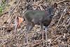 Deer2674