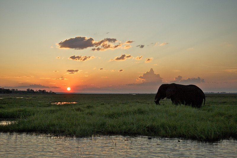 Elephant at Sunset, Chobe River, Botswana