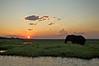Elephant at Sunset, Chobe River, Botswana