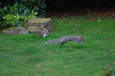 Rabbit and Grey Squirrel