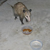 "<a href=""http://xenogere.com/wasnt-there-more-food-in-that-bowl/"" title=""Wasn't there more food in that bowl?"">Blog entry</a>"