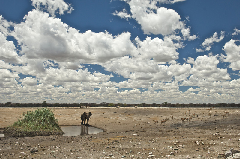 Elephant and Impala, Chudop Waterhole, Etosha National Park, Namibia