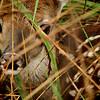 "<a href=""http://xenogere.com/2014/08/17/newborn/"" title=""Newborn"">Blog entry</a>"