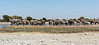 Elephant Herd at Waterhole, Etosha National Park, Namibia