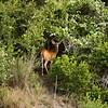 """<a href=""""http://xenogere.com/i-aint-no-predator-yo/"""" title=""""I ain't no predator, yo"""">Blog entry</a>"""