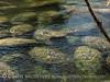Manatees, 3 Sisters Springs, Crystal River FL (2)