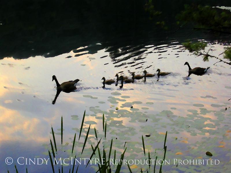 Canada Goose Family impressions