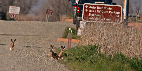 Welcome Committee, Colusa WLR