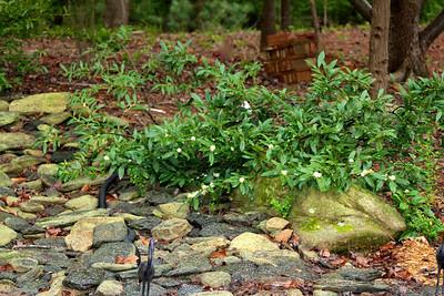 Bush by the pond2012-03-23