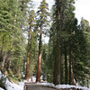 A look at the road to Mariposa Grove.