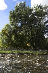 Etobicoke Creek