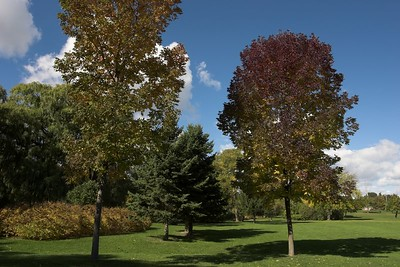 Autumn in Marie Curtis Park