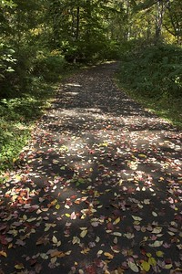 Fallen leaves on the waterfront trail (submitted to Photoblogs Magazine)
