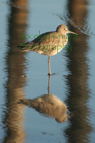ShoreBird3417