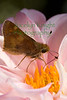 Skipper6086(8x12) copy