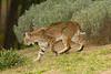Bobcat9243(8x12) copy