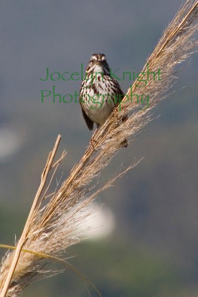 Sparrow9804