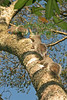 3Squirrels8889 (18x12)