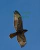 Hawk9075