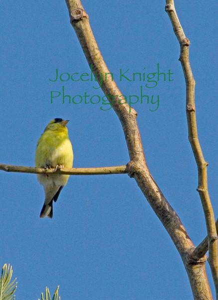 Finch0569 copy