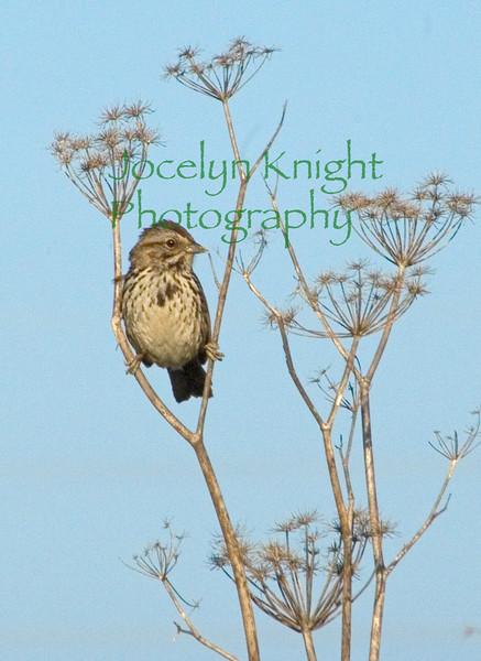 Sparrow0571