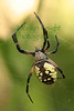 Spider0486