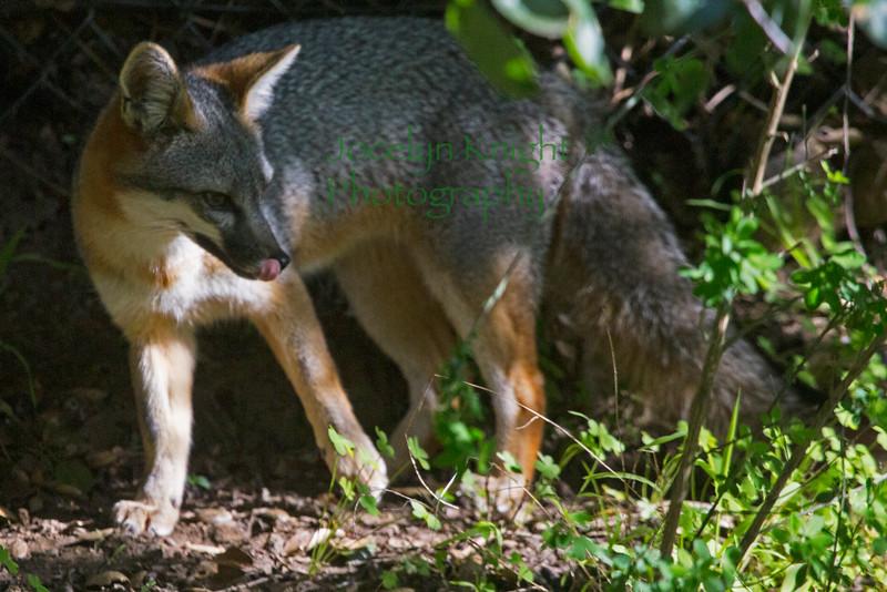 Fox6149