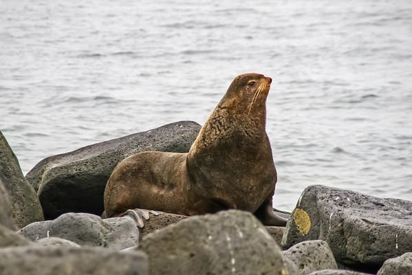Seals, Walrus, Sea Otters