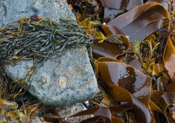 Schoondik Point, Acadia NP, ME