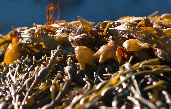 seaweed6