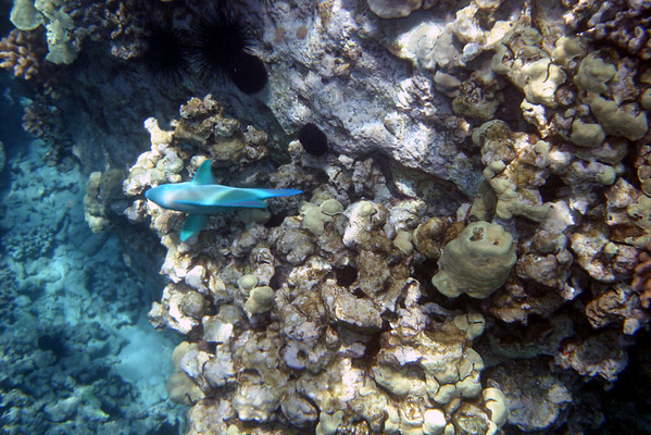 Image from Hawaii