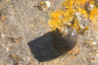 snail1