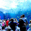 Atlanta Aquarium on 07/11/08 in Georgia