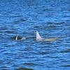 Dolphin Daze Private Dolphin Tour 03-16-18