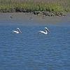 Jekyll Island Boat Tours Dolphin Tour 03-15-18
