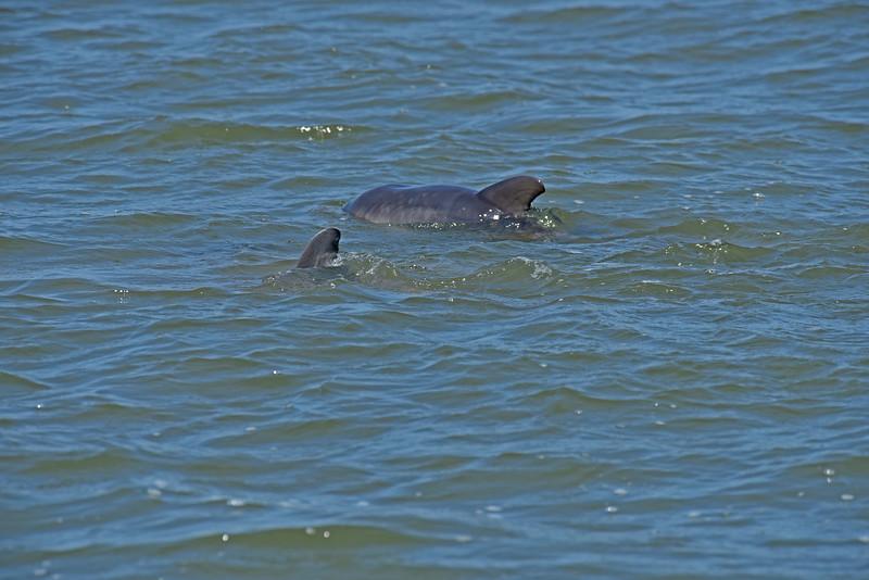 Dolphin Tour - Jekyll Island Boat Tours 04-12-18