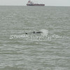 (130) Galveston Island Ferry Ride - Dolphins