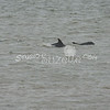 (155) Galveston Island Ferry Ride - Dolphins