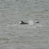 (154) Galveston Island Ferry Ride - Dolphins