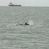 (128) Galveston Island Ferry Ride - Dolphins