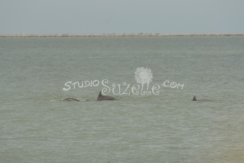 (112) Galveston Island Ferry Ride - Dolphins