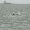 (127) Galveston Island Ferry Ride - Dolphins